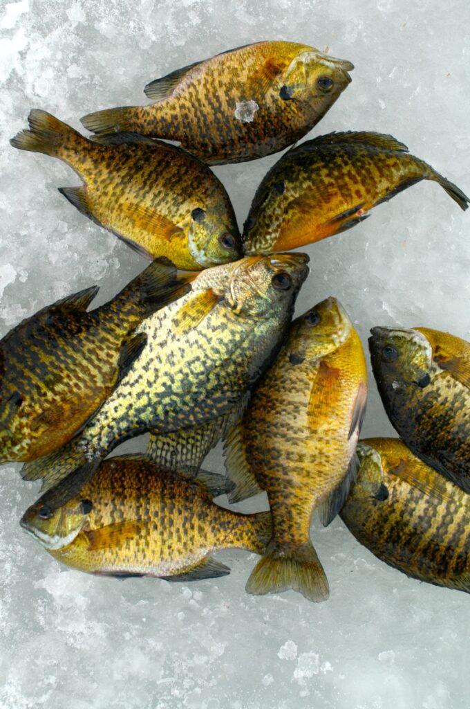 Ice,Fishing,(13)