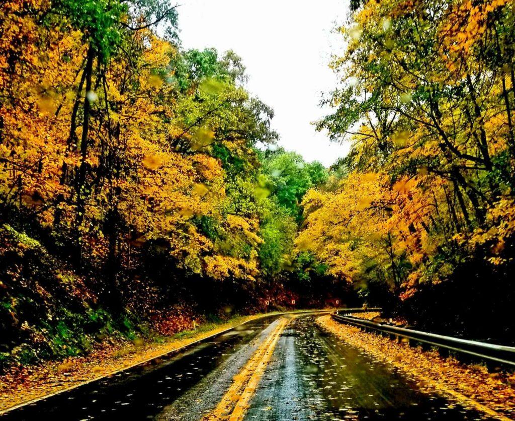 Fall pic inNelson Dewey